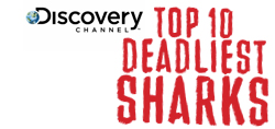 View Top 10 Deadliest Sharks Gallery.